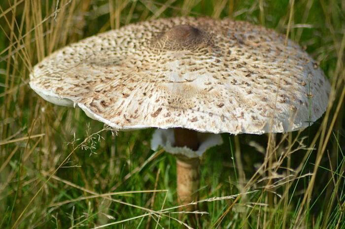 Разновидности грибов белгородской области: отзывы грибников белгородчины