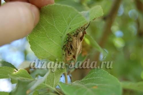 Применение нитрофена для винограда - мыдачники
