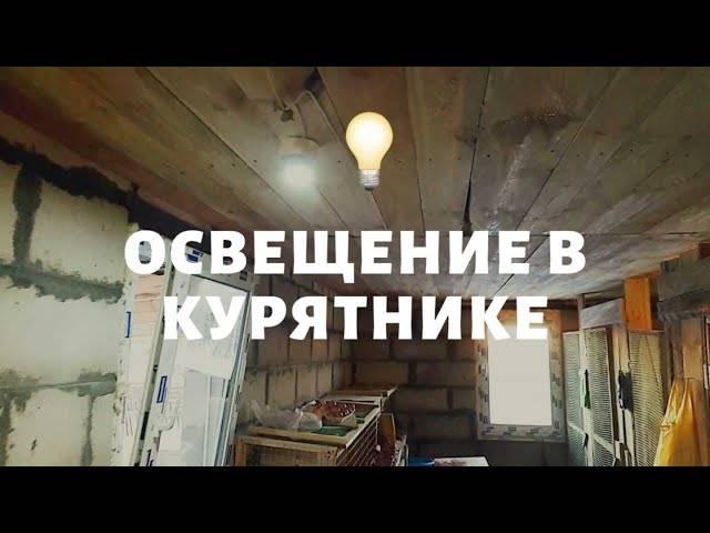 Освещение курятника: подбор ламп и программ в зависимости от птицы