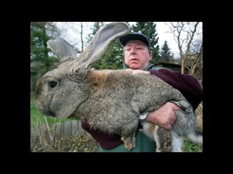Плюсы и минусы бизнеса по разведению кроликов