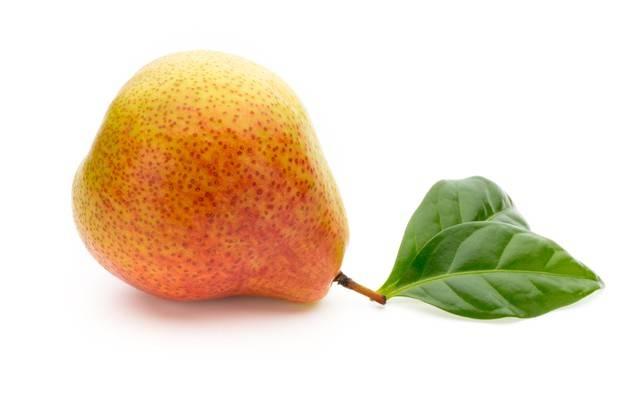 Декоративная груша — вьющаяся: сорта, особенности посадки и ухода за деревом