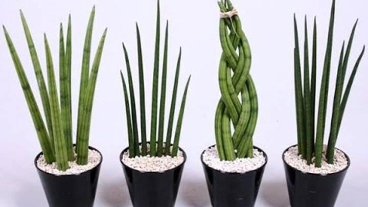 Самые неприхотливые и полезные растения для офиса