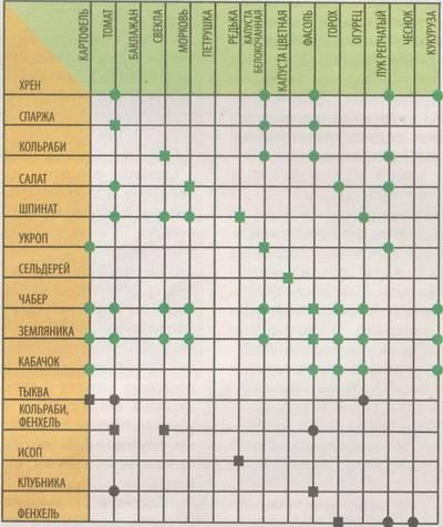 Совместимость растений в саду и огороде (таблица)
