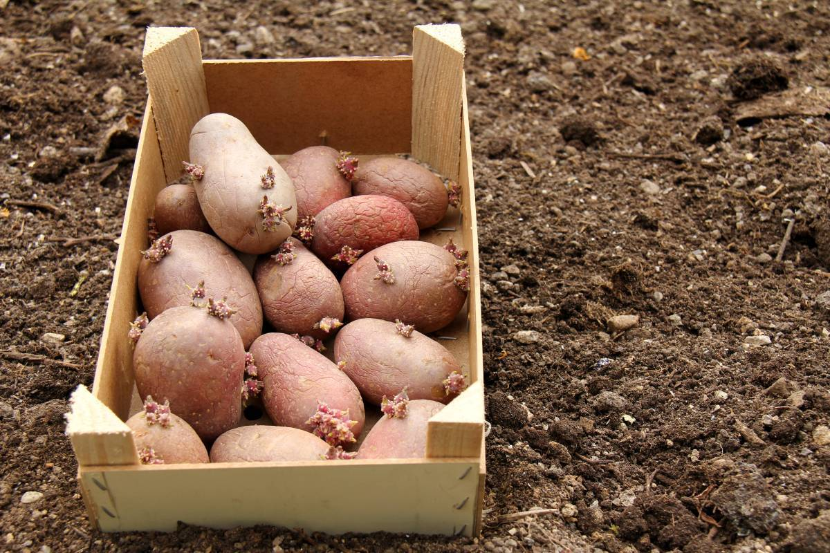 Обработка картофеля от жука. чем травить колорадского жука на картошке. | красивый дом и сад