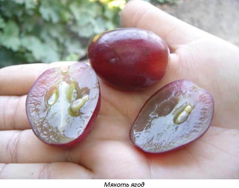 Виноград эверест: описание сорта, фото, отзывы