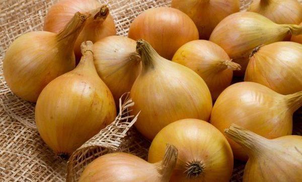 Сорт лука для северных регионов — сибирский: характеристика, выращивание