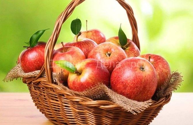 Подпорки для яблонь своими руками: как подпереть ветки и поднять упавшую яблоню