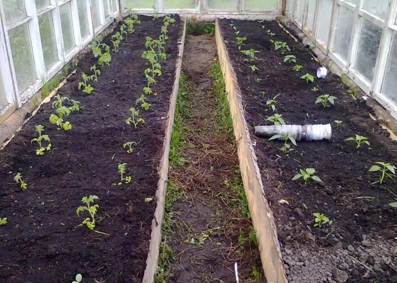 Чем удобрять помидоры при посадке: какие удобрения нужно вносить в лунку при высадке в открытый грунт или теплицу, как удобрять почву перед пересадкой томатов