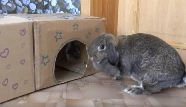 Клетки для кроликов своими руками: как сделать?