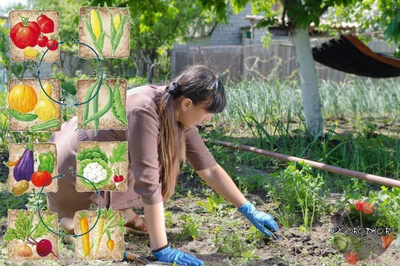 Какие растения можно сажать на место прежней культуры