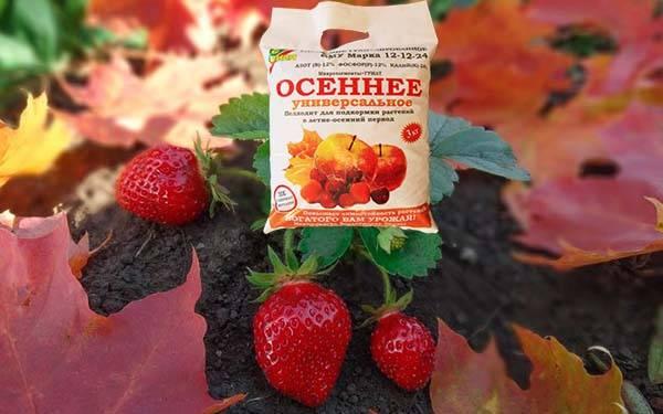 Чем лучше подкормить клубнику осенью? советы, секреты, рекомендации |