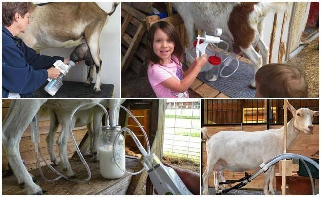Доильный станок для козы своими руками
