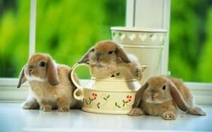 Сколько живут декоративные кролики в домашних условиях?