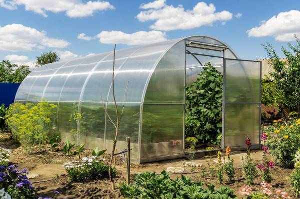 Как вырасти помидоры в теплице из поликарбоната