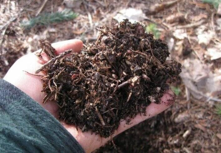 Болезни рассады баклажанов на листьях
