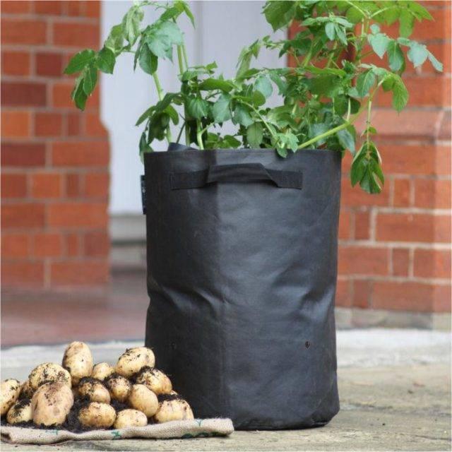 Как собрать ведро картофеля с одного куста: пошаговая инструкция по выращиванию урожая в ящиках и коробах без дна