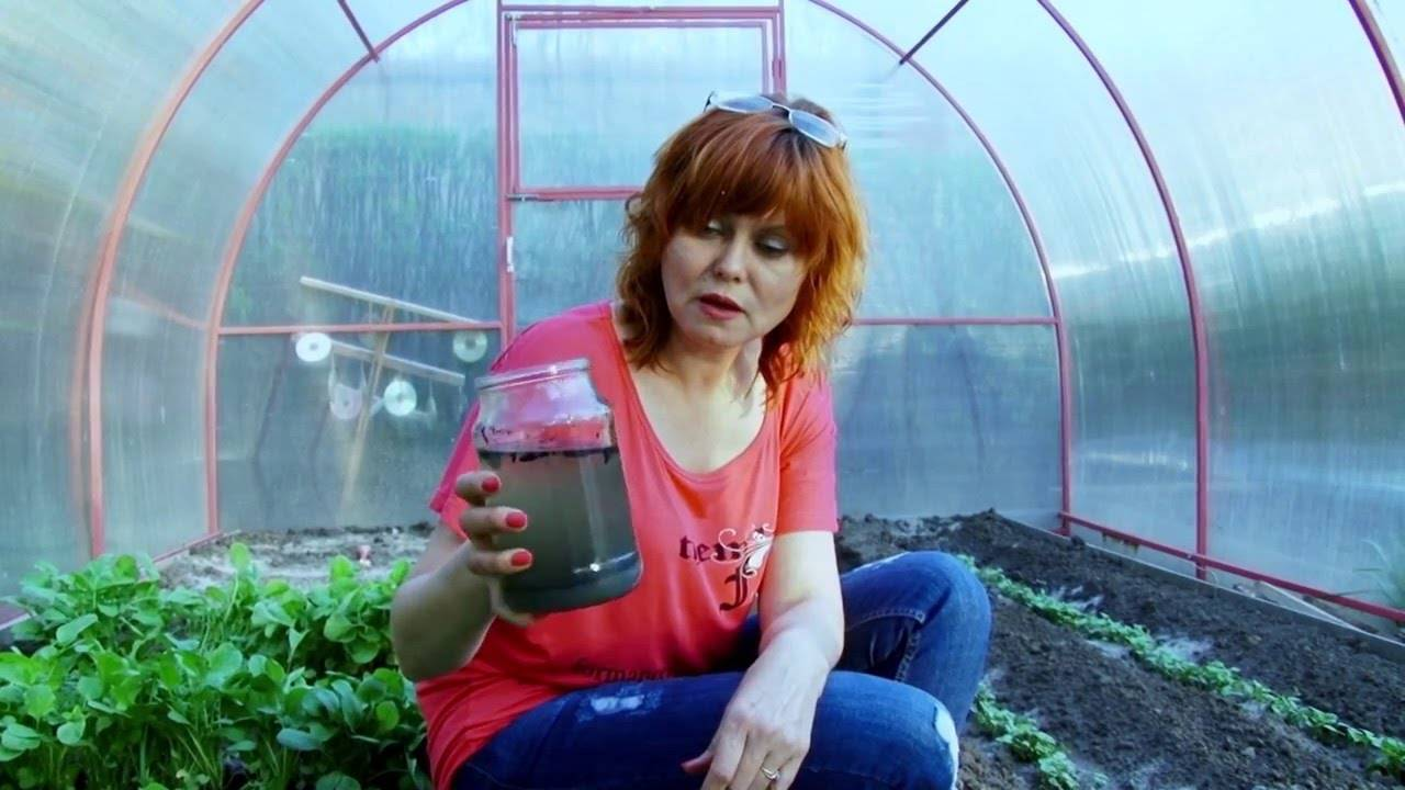 Чем подкормить баклажаны: виды удобрений, как вносить