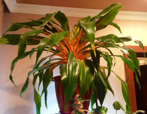 Хлорофитум: фото, польза для дома, вреден ли данный комнатный цветок? selo.guru — интернет портал о сельском хозяйстве
