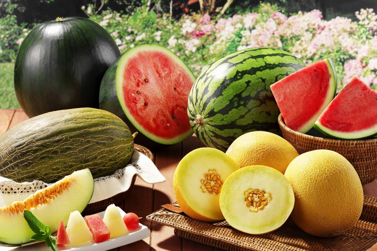 Чем подкормить арбузы после высадки в открытый грунт. правила посадки и выращивания арбузов и дынь