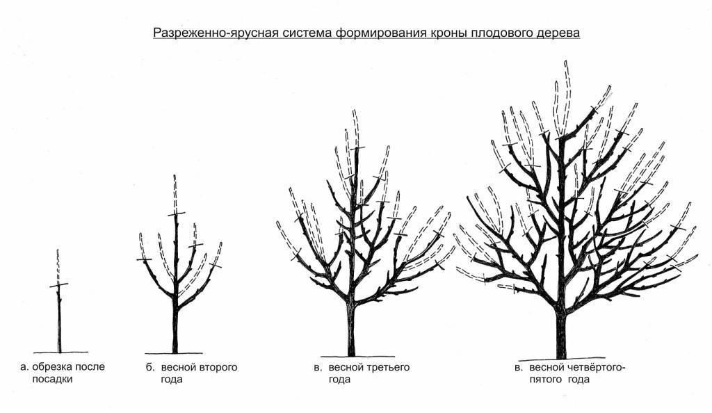 Весенняя обрезка плодовых деревьев и кустарников ранней весной