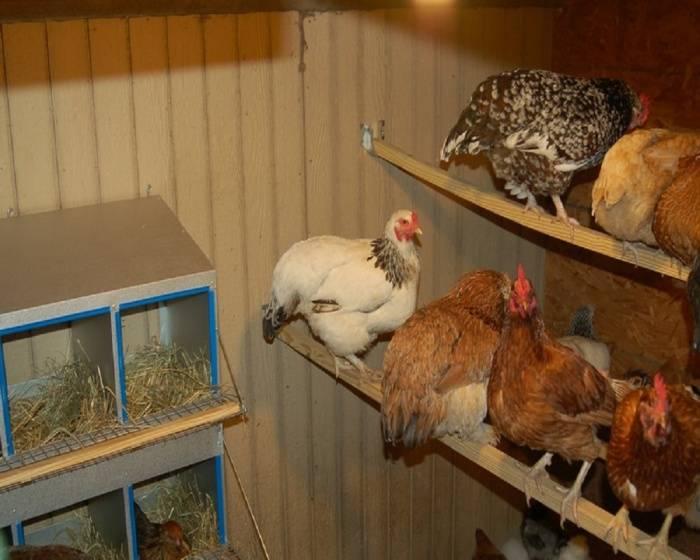 Содержание кур в зимний период. основные моменты по оборудованию курятника, организация выгула и питания