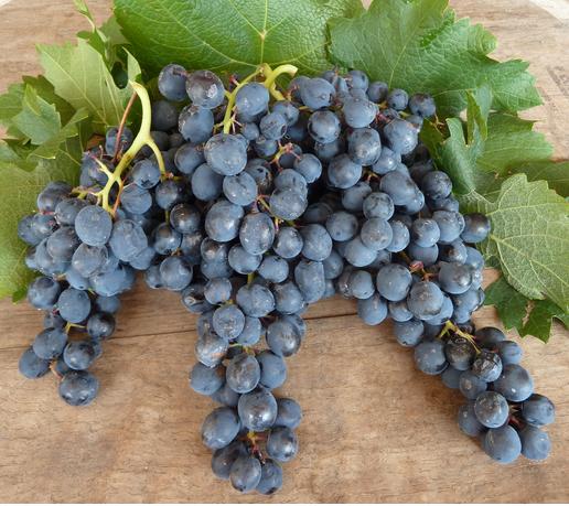 Виноград северный сладкий: описание сорта и особенности его выращивания - деревья и кустарники | описание, советы, отзывы, фото и видео