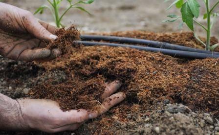 Инструкция как выращивать рассаду в пеленках
