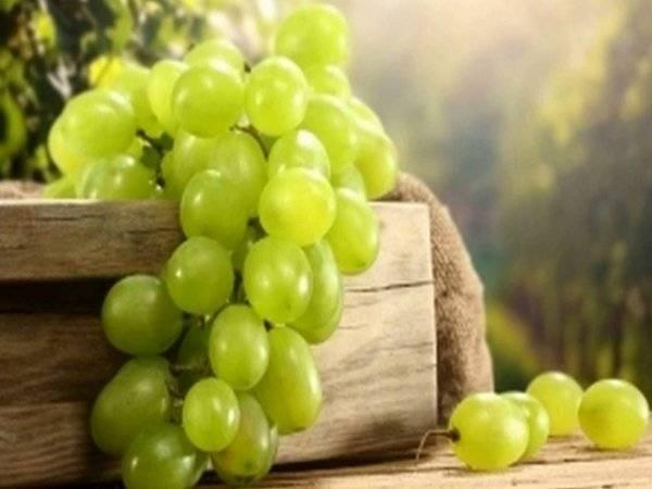 Особенности сорта винограда белое чудо