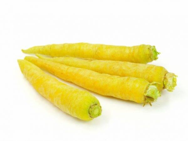 Белая морковь: сорта, вкус, полезные свойства. почему морковь белая, а не оранжевая? фиолетовая морковь