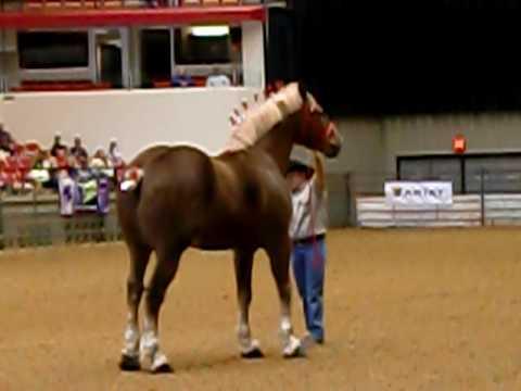 Самая дорогая лошадь в мире (21 фото): описание красивых и дорогих пород коней