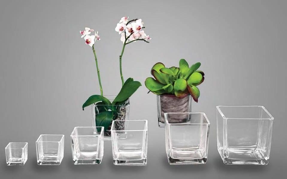 Выращивание орхидей без грунта в стеклянной вазе