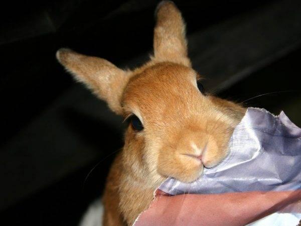Причины, по которым кусается кролик