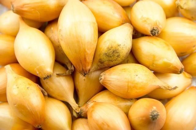 Центурион лук: описание сорта севка, характеристика озимого гибрида f1 и можно ли его сажать под зиму, советы по посадке и уходу, фото луковиц и отзывы фермеров
