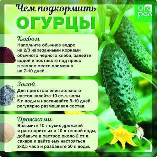 Нитрофоска: состав удобрения, применение, инструкция для томатов, огурцов