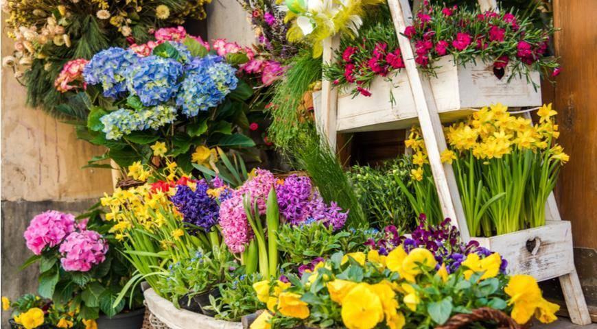 Как посадить лилии весной, чтобы они хорошо цвели?