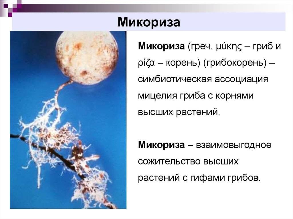 Особенности грибов-симбионтов