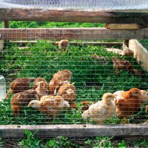 Возведение клетки для цыплят