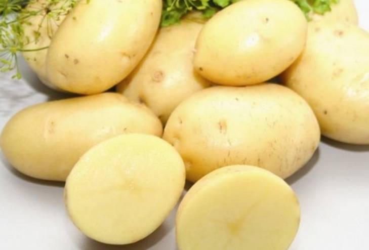 Картофель каратоп: описание и характеристика, отзывы