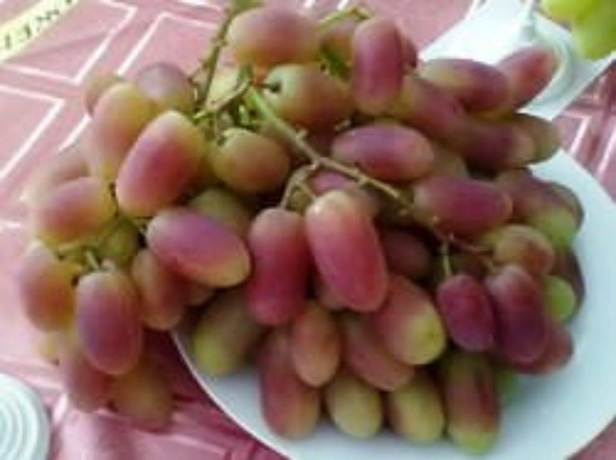 Описание сорта винограда преображение