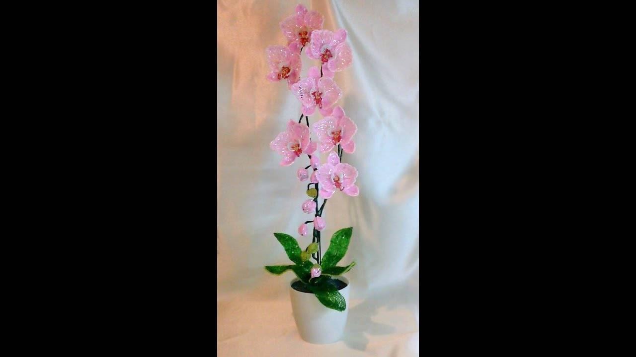 Сорта и виды фаленопсисов: фото, названия, описание всех самых популярных орхидей, рекомендации по уходу русский фермер