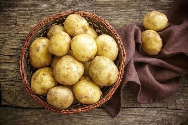 Голубизна: один из лучших сортов картофеля