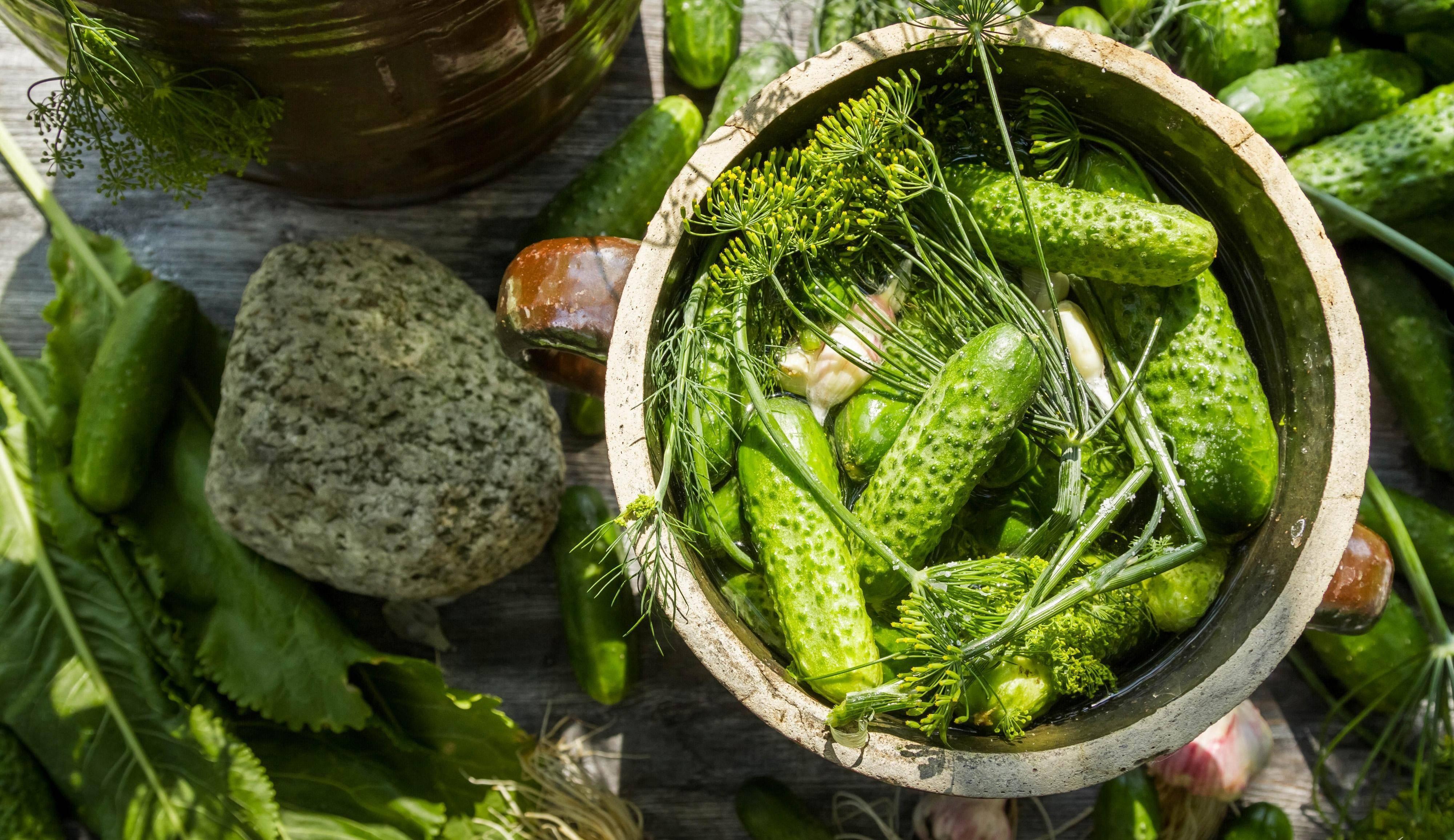 Лучшие самоопыляемые сорта огурцов для засолки и консервации, описание и нюансы выращивания.
