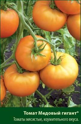 ✅ медовый спас: описание сорта томата, характеристики помидоров, посев - tehnomir32.ru