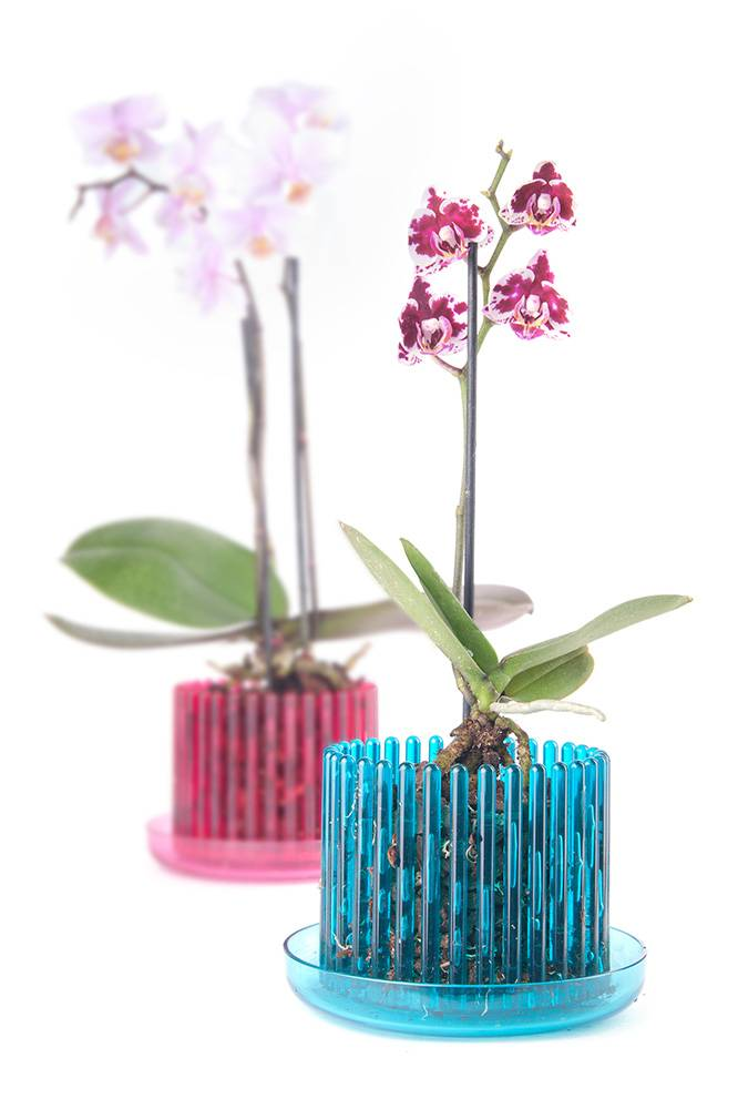 Популярность прозрачных горшков для орхидеи – необходимость или дань моде?