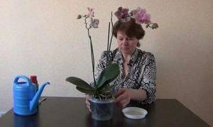 Как поливать орхидею в домашних условиях: пошаговое фото, а также сведения о том, какую воду использовать для правильного увлажнения субстрата selo.guru — интернет портал о сельском хозяйстве