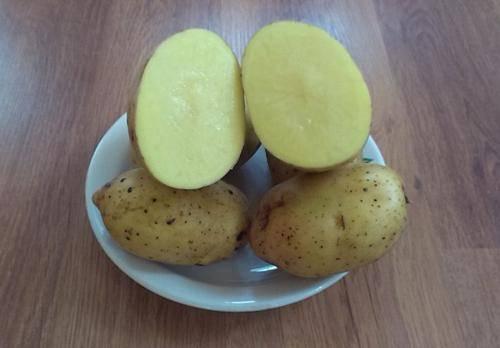 Сорт картофеля любава характеристика отзывы фото