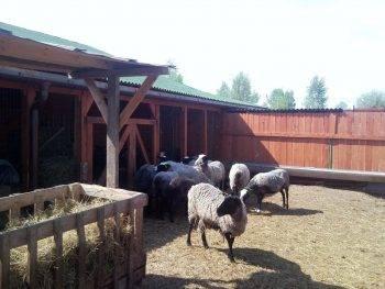 Овчарня для овец своими руками. чертежи, советы, фото и видео