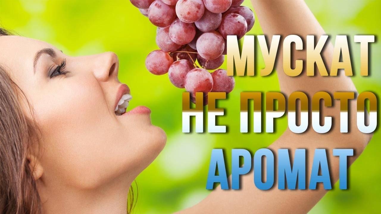 Выращивание винограда – уход и секрет крупных гроздей – 4 сезона огородника