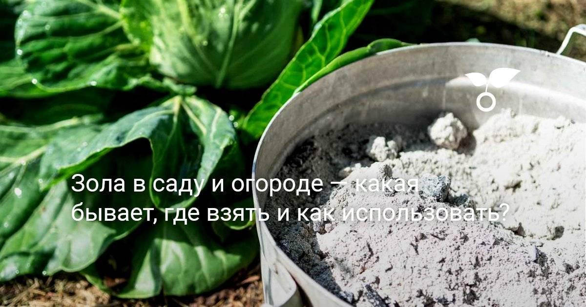 Зола как удобрение, как применять - как правильно использовать для растений? – дачные дела