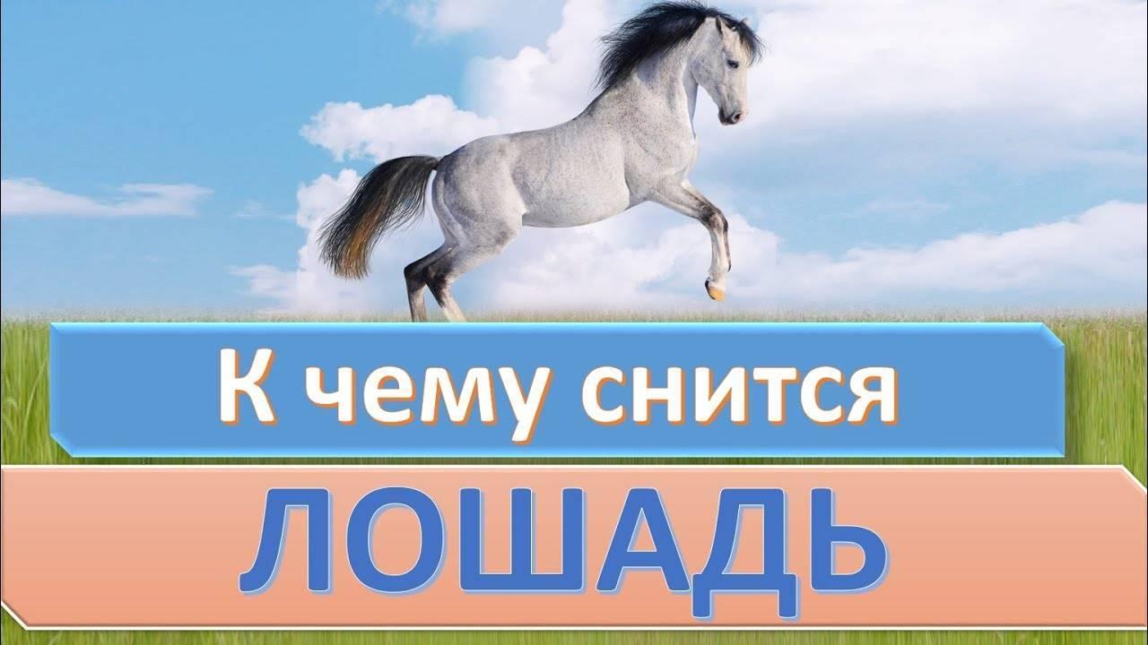 Видеть во сне лошадь: что означает?